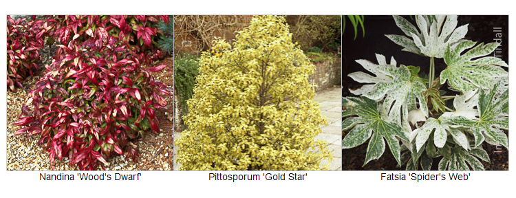 Plants with Exceptional Foliage