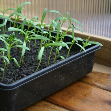 Seed Trays and Pots