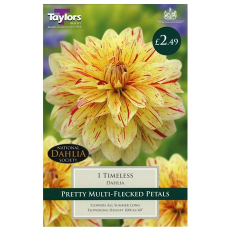 Dahlia Timeless (Single) - Taylors Bulbs (TS391)