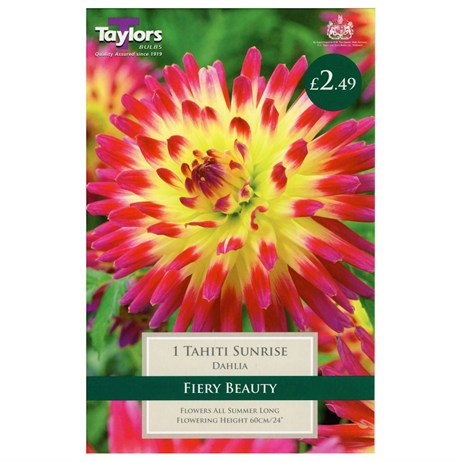 Taylors Bulbs Dahlia Tahiti Sunrise (Single Pack) (TS362)
