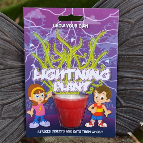 Fun Seeds - Grow Your Own: Lightning Plant