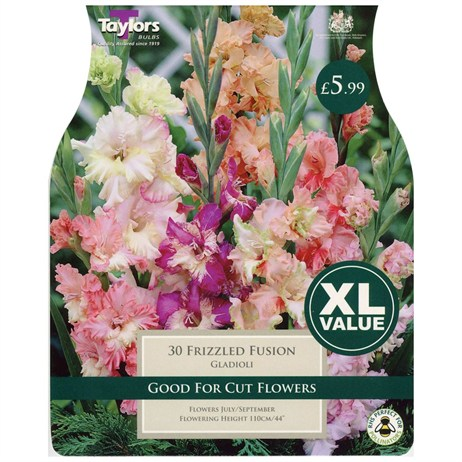Taylors Bulbs Gladioli Frizzled Fusion (30 Pack) (XL508)