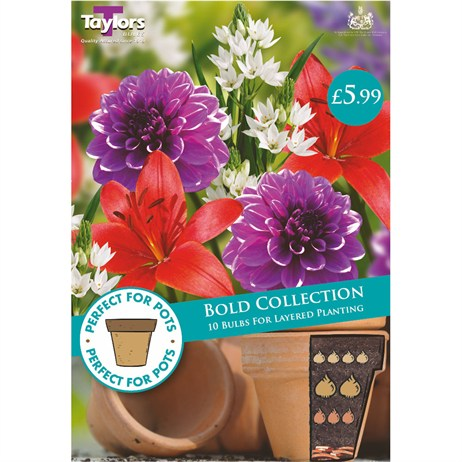 Taylors Bulbs Bold Collection (10 Pack) (SPPA05)