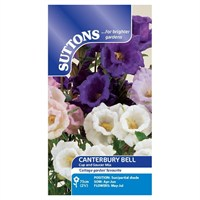 Suttons Canterbury Bell Seeds - Cup and Saucer Mix (107884)
