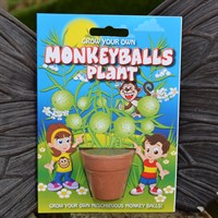 Fun Seeds - Grow Your Own: Monkeyballs Plant