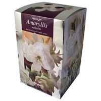 Taylors Bulbs Amaryllis Alfresco - Single (AP93F)