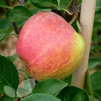 Apple James Grieve M26 - 10 Litre