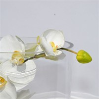 Artificial Phalaenopsis Orchid Cylinder Vase