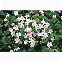 Bacopa Collection 6 Pack Boxed Bedding
