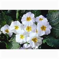 Primrose White 6 Pack Boxed Bedding