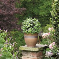 Gardman 30cm Topiary Ball Purple Flower Effect (02808)