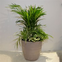 Large Beige Planter - Various Greenery - 70-80cm