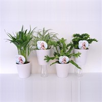 Air So Pure Plant Mix In Diabolo Pots - Set of 6 - 12cm x 25cm