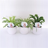 Air So Pure Plant Mix - Set of 6 In Bolpots - Various Houseplants - 12cm x 25cm