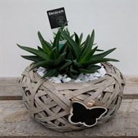 Aloe Design 2 In Nest With Butterfly Motif