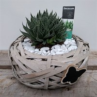 Aloe Design 3 In Nest With Butterfly Motif