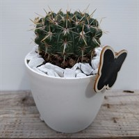 Cacti In White Pot Design 2 With Butterfly Motif