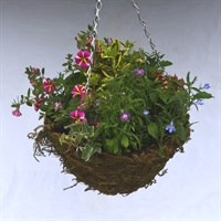 Feather Moss Hanging Basket 12 Inch