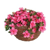 Gardman 14in Artificial Pink Azealia Wall Basket (02848)