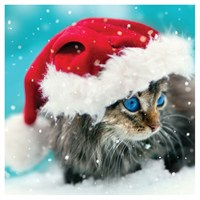 Ling Design Charity Christmas Cards 6 Pack - Blue Eyed cat (X12228RCJP)