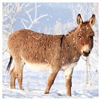 Ling Design Charity Christmas Cards 6 Pack - Donkey in Snow (X12224RCJP)