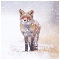 Ling Design Charity Christmas Cards 6 Pack - Fox in Snow (X1226RCJP)
