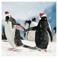 Ling Design Charity Christmas Cards 6 Pack - Penguins Dancing (X12230RCJP)