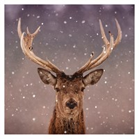 Ling Design Charity Christmas Cards 6 Pack - Reindeer (X12223RCJP)