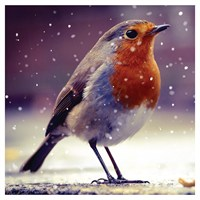 Ling Design Charity Christmas Cards 6 Pack - Robin (X12225RCJP)