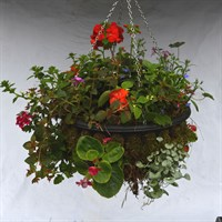 Mossed Summer Hanging Basket - 14 Inch