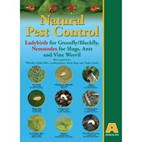 Agralan Aphid Control Adult Ladybirds (25) (BC03)