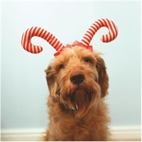 Rosewood Dog Clothing - Candy Cane Christmas Antlers (38992)