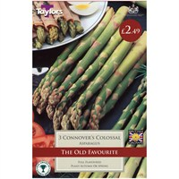 Taylors Bulbs Asparagus Connover's Colossal - Pack of 3 (AVEG2)