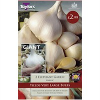 Taylors Bulbs Elephant Garlic - Pack of 2 (AVEG15)