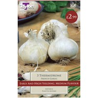 Taylors Bulbs French Garlic Thermidrome - Pack of 3 (AVEG9C)