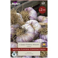 Taylors Bulbs Garlic Early Purple White - Single (AVEG20)