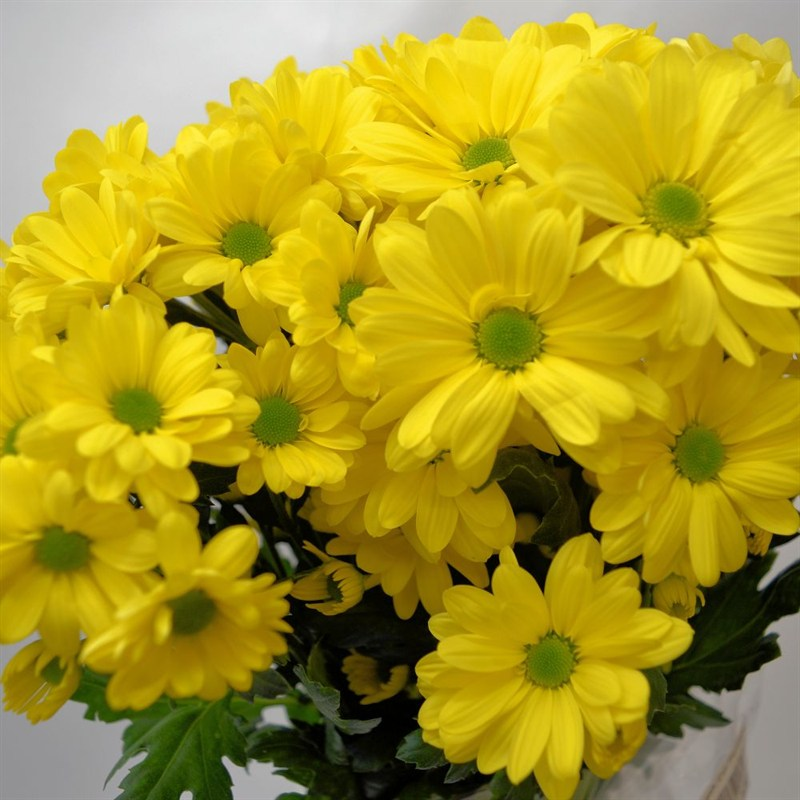 About Flowercraft Fish Hoek: We offer same-day flower delivery on all arrangements. We are committed to providing superb customer service top quality flowers for individuals and businesses in Fish Hoek, Cape Town, South Africa area.
