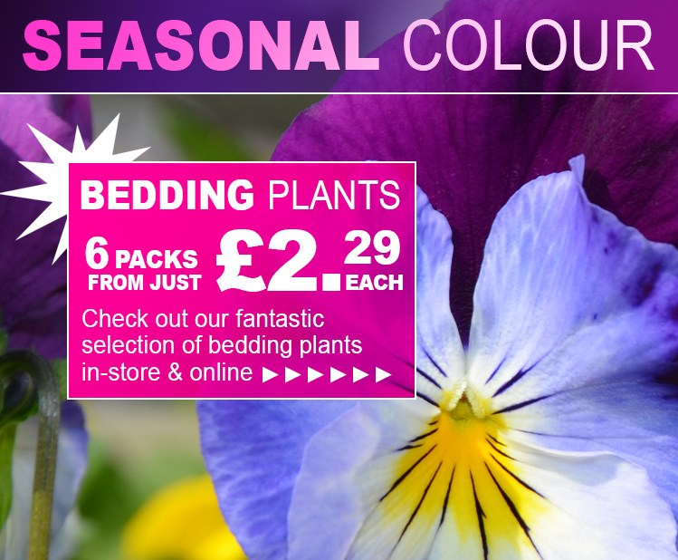 Bedding plants for your garden