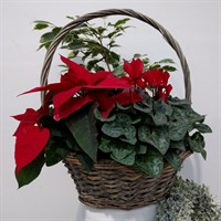Festive Planted Natural Basket - Large (1210)