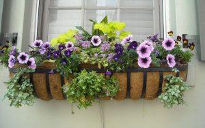 marchplants17-image3