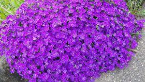 marchplants17-image4