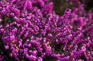 marchplants17-image5