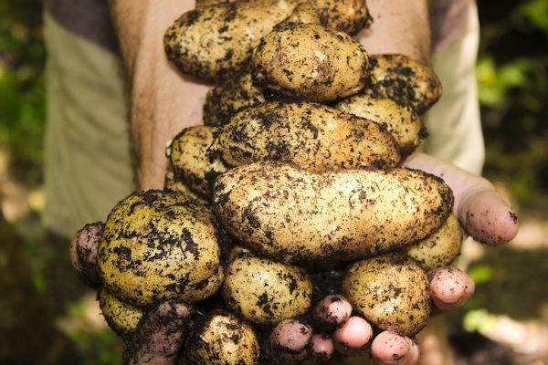 marchplants17-image7