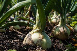 marchplants17-image8