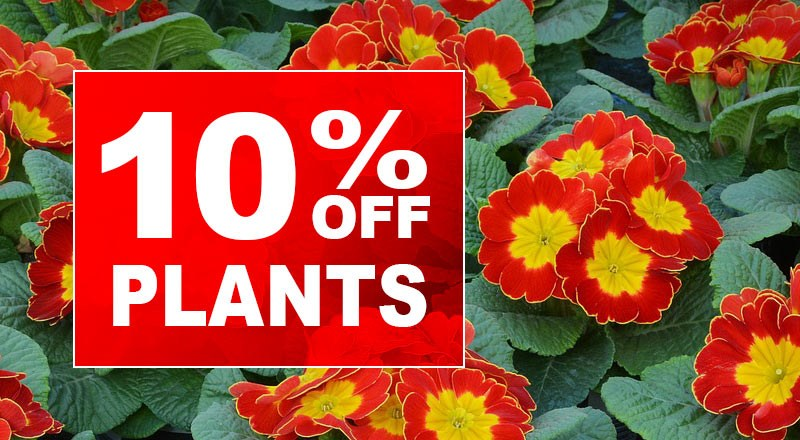 Blog_plants10percent_02.jpg