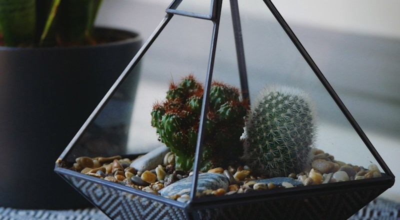 TerrariumWorkshops_June_2018-headerv22.jpg