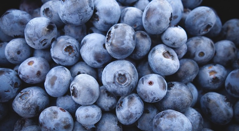 growing-blueberries-031017.jpg