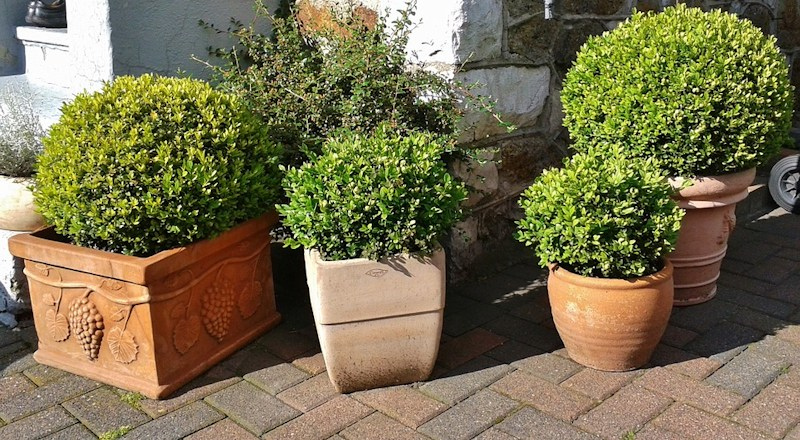how-to-plant-shrubs-in-containers-010418.jpg