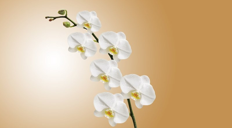 longacres-bagshot-orchid-care-talk-and-orchid-clinic-5gbp-voucher-with-every-ticket.jpg