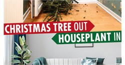 Christmas-Tree-Out-Houseplant-In-Homepage-2020.jpg